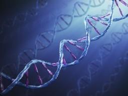 Understanding Your Marketing DNA   Social Media, SEO, Mobile, Digital Marketing   Scoop.it