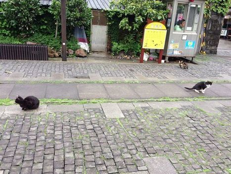 Houtong Cat Village – How a Few Purring Felines Saved a Dying Community | Cats Kitties Felines | Scoop.it