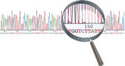 A CRISPR view of genome sequences   bacteriophage, bacteria   Scoop.it