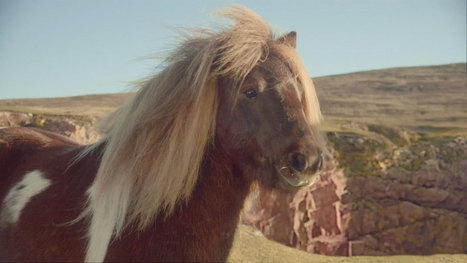 This Dancing Shetland Pony Is Britain's New Advertising Superstar | minuture horses | Scoop.it