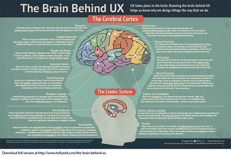 UX and The Brain by Hello Erik - User Experience @Erik_UX | Effective UX Design | Scoop.it
