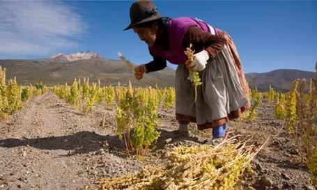 The Changing Geography of Quinoa | Geography Education | Scoop.it