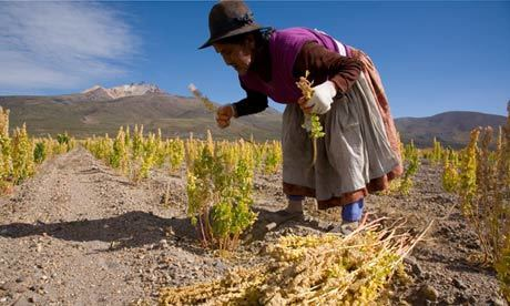 The Changing Geography of Quinoa | Als Return to Education | Scoop.it