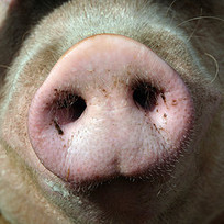 The Conflict Of Social Business: Lipstick On A Pig | SideraWorks | Do the Enterprise 2.0! | Scoop.it