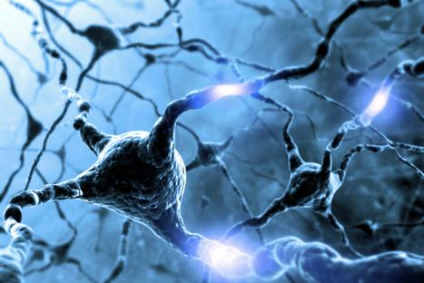 Hardwiring happiness into the brain - Washington Times   Brain Science   Scoop.it