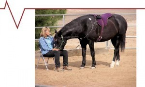 Measuring the Emotional Bond between Horses and Humans | Habitat For Horses | The wonderful world of horses | Scoop.it