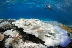 Coral bleaching spreads to Maldives, devastating spectacular reefs | Banco de Aulas | Scoop.it