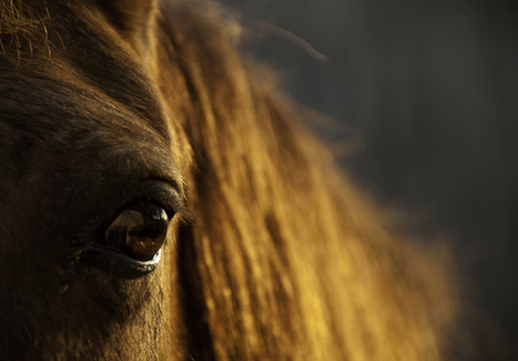 The Way of the Horse | Emotional Wisdom | Scoop.it