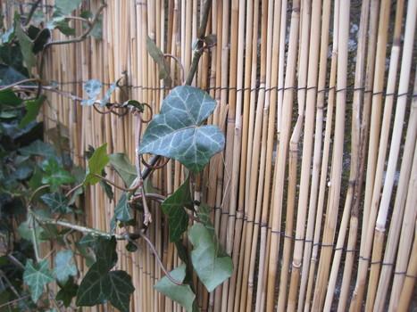 C t jardin une canisse en bambo for Habiller un mur en parpaing
