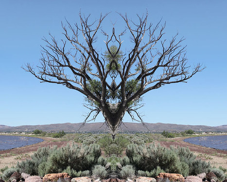 Strange Floating Formations Created by Mirroring Photos of Trees | Digital-News on Scoop.it today | Scoop.it