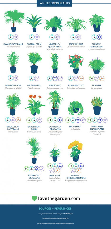 NASA Has Compiled a List of the Best Air-Cleaning Plants for Your Home   The New School   Scoop.it