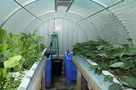 New Zealand - Aquaponics food security solution? | Aquaponics in Action | Scoop.it