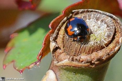 Circule, virgule... ou je t'apostrophe ! | Les colocs du jardin | Scoop.it