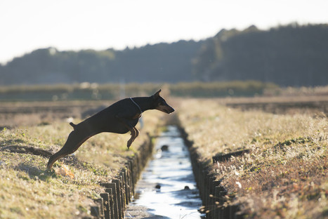 How dogs find their way home (without a GPS) | Knowmads, Infocology of the future | Scoop.it