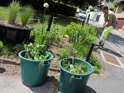 Objectif zéro phyto pour les espaces verts ruthénois | Les colocs du jardin | Scoop.it