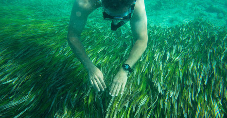Cuba and U.S. Agree to Work Together to Protect Marine Life | Coastal Restoration | Scoop.it
