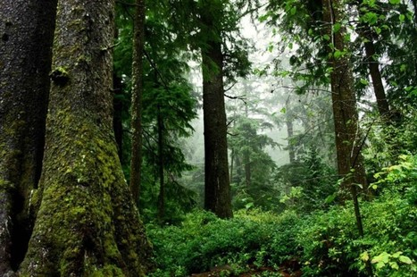Evaporation: Closing the Gap between Forest and Urban Water Flows | Biomimicry 3.8 | Scoop.it