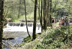 State funds replacement for problem-plagued hatchery dam - Issaquah Press | Fish Habitat | Scoop.it