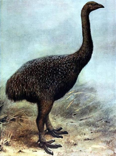 Late-Holocene Bird Extinction Linked to Human Colonization | Oceania Hoy! Diario Nacional | Scoop.it