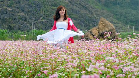 Tam Giac Mach (Buckwheat) flower season in Ha Giang 2014   Travel News   Scoop.it