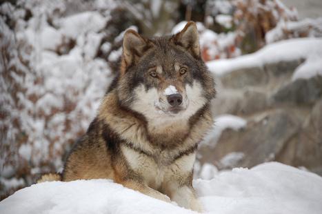 Quel est l'animal le plus dangereux pour l'homme? | Let me think about it | Scoop.it