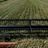 Monsanto - pesticides (OGM