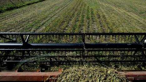 Monsanto nie que ses pesticides soient à l'origine des problèmes de santé en Argentine | Monsanto - pesticides (OGM | Scoop.it