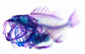 Iori Tomita Transparent Specimens | Art, Design & Technology | Scoop.it