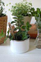 easy herbal centerpiece - {frolic!} | Non solo weddings | Scoop.it
