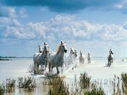 Wallpaper Λευκά άλογα να βραχούν | φύση nansy | Scoop.it