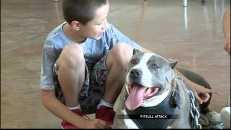 Pitbull mauls little boy; neighbors say it's not the dog's fault | Global Evolution: Will we be in time? | Scoop.it