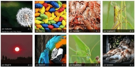15 Bancos de Imágenes Gratis para descargar│@maedelac | educacion-y-ntic | Scoop.it