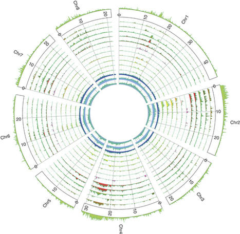 The high-quality draft genome of peach (Prunus persica) identifies unique patterns of genetic diversity, domestication and genome evolution : Nature Genetics : Nature Publishing Group | Crop Evolution, Domestication, and Biodiversity | Scoop.it