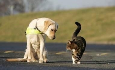 Pronto intervento per soccorso animali in difficoltà   Bau Bau News - Amici a 4 Zampe   Scoop.it