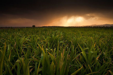 Scotland will ban the growing of GM crops   Anonymous Canada International news   Scoop.it