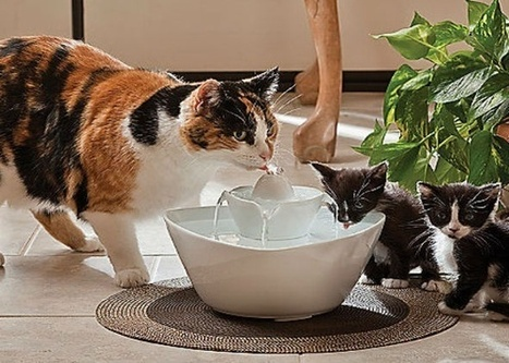 http://pinxpets.com/celebrate-adopt-a-shelter-cat-month-with-these-cool-cat-products/   Dog Products   Scoop.it