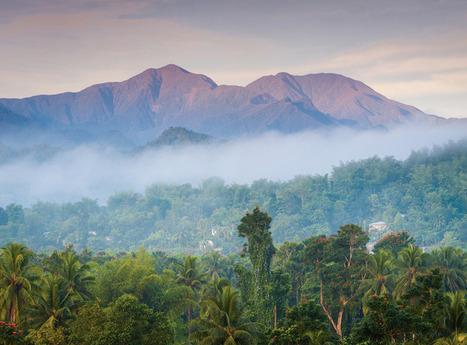 Blue Mountain hike | Caribbean Island Travel | Scoop.it