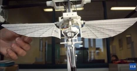Drone - Des belges inventent un colibri robotisé - Tinynews | Ressources pour la Technologie au College | Scoop.it