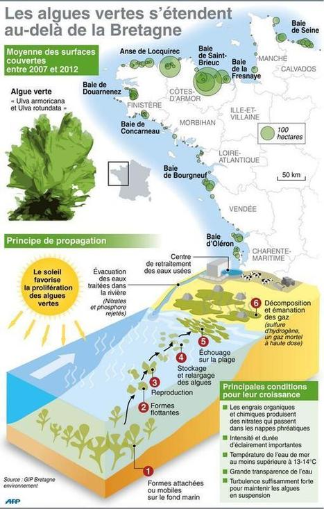 [INFOGRAPHIE] Localisation des sites pollués par les algues vertes en France   Toxique, soyons vigilant !   Scoop.it