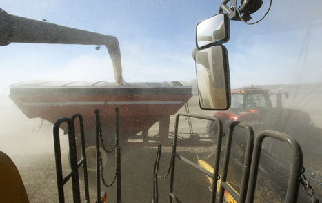 Lack of soybean crushing facilities in Wisconsin costly for farmers | oilseed | Scoop.it