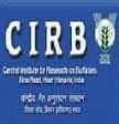 CIRB Hisar Recruitment 2013 Walk In For SRF Posts In Haryana | Aptitude Leader | jobs | Scoop.it