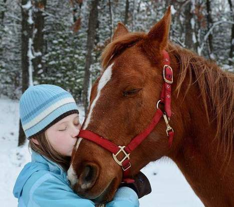 Donor gives Osseo girl, 12, a horse for Christmas - The Oshkosh Northwestern | Unique horses | Scoop.it