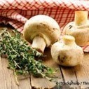 The Health Benefits of Mushroom Consumption | Health and Wellness | Scoop.it