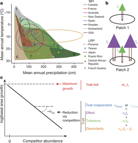 Plant functional traits have globally consistent effects on competition | Statistical Physics of Ecological Systems | Scoop.it
