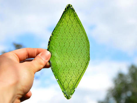 Man-made 'breathing' leaf is an oxygen factory for space travel - CNET | Knowmads, Infocology of the future | Scoop.it