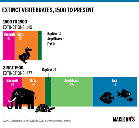 Infographic: Charting the world's sixth mass exinction - Macleans.ca | Social 10-1 | Scoop.it