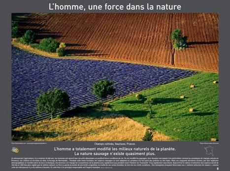 Au coeur des forêts – Lense.fr   iconoMix   Scoop.it