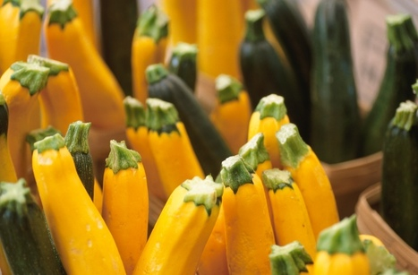 Watch for Rot on Tomatoes and Zucchini | | Vegetable Gardening Resources | Scoop.it