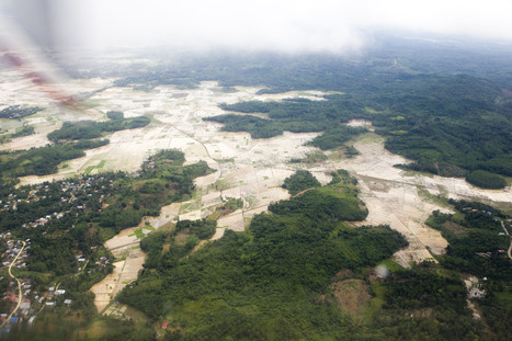Deforestation   Threats   WWF   Geography - Studies in Human Geography   Scoop.it