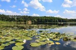 Freshwater biodiversity – the big picture - Horizon 2020 - European Commission | GarryRogers NatCon News | Scoop.it